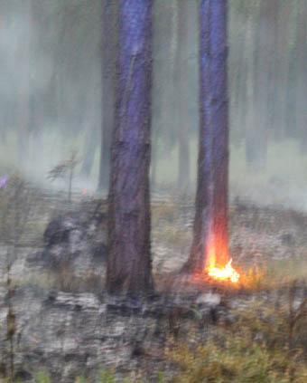 Waldbrand4