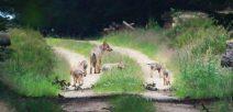 Uelzener Weidetierhalter-Veranstaltung zum Wolf