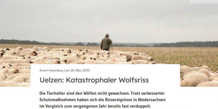 Uelzen: Katastrophaler Wolfsriss