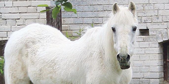 """""""Mietze"""" ist im Pferdehimmel"""